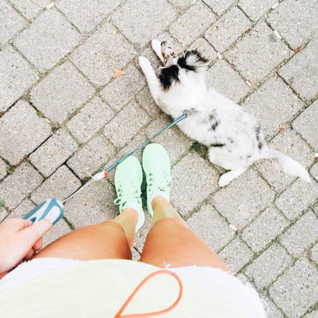 Dog sitter Cathy w denisellos schimmelbein